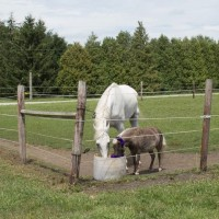 Westwind and Louise sharing a drink.
